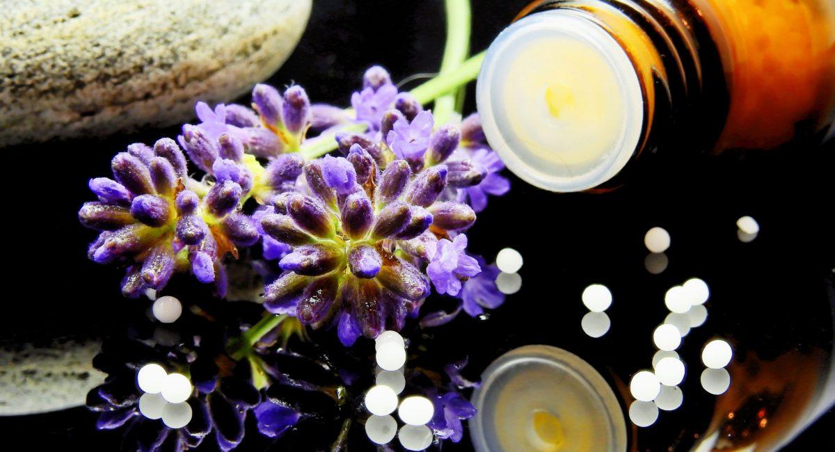 green-purple-flower-163186